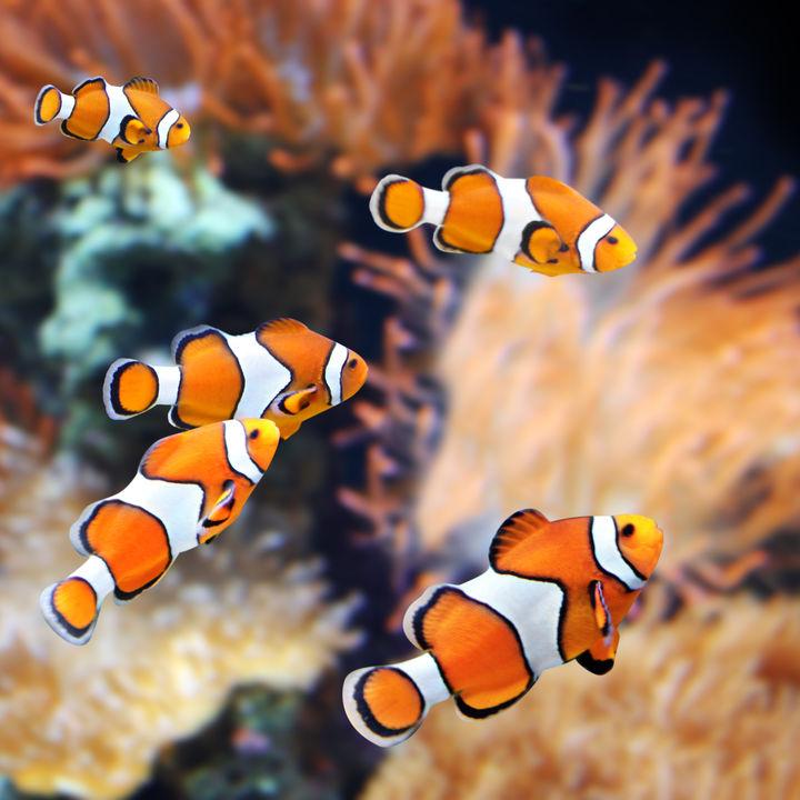 都内の水族館。ふれあい体験ができる子連れにおすすめのスポット