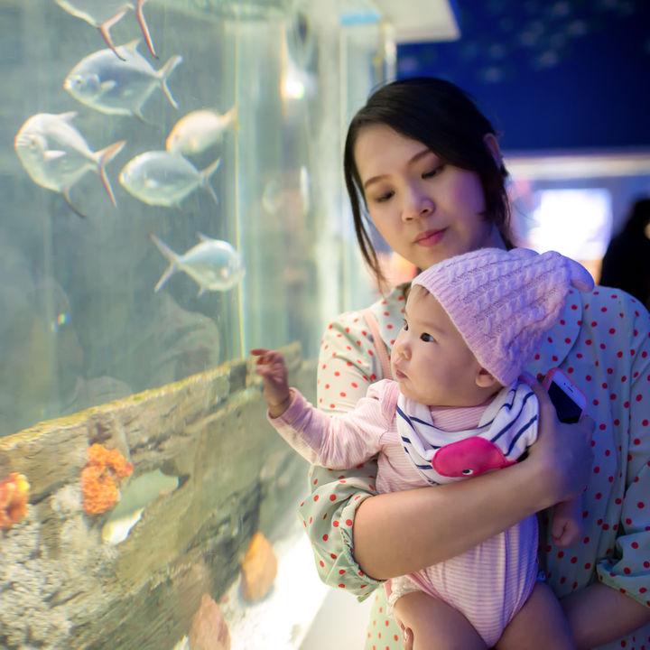 東京の赤ちゃん連れで楽しめる水族館はどこ?ママ目線で選んだ5つの施設情報