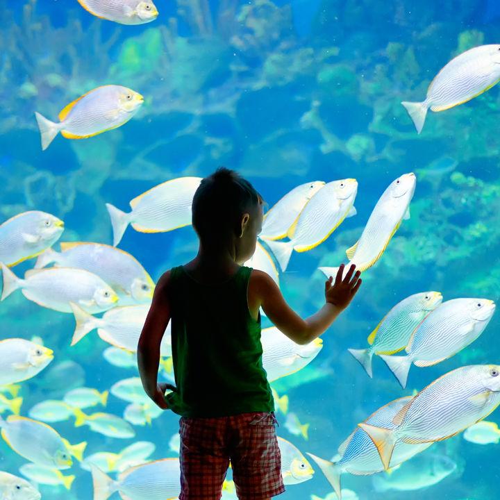 静岡県のお正月も営業している水族館で新年も遊ぼう