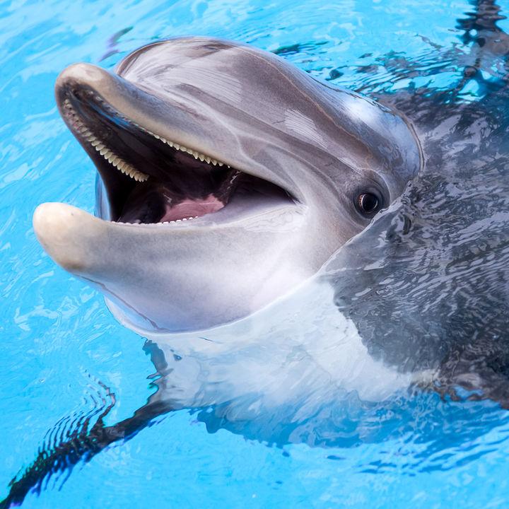 大阪近郊のえさやりプログラムがある水族館。間近に見る生き物体験で子どもを楽しませよう