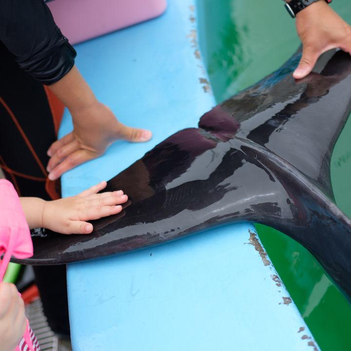 北陸で生き物に触れる体験ができる水族館。家族でいっしょに楽しもう