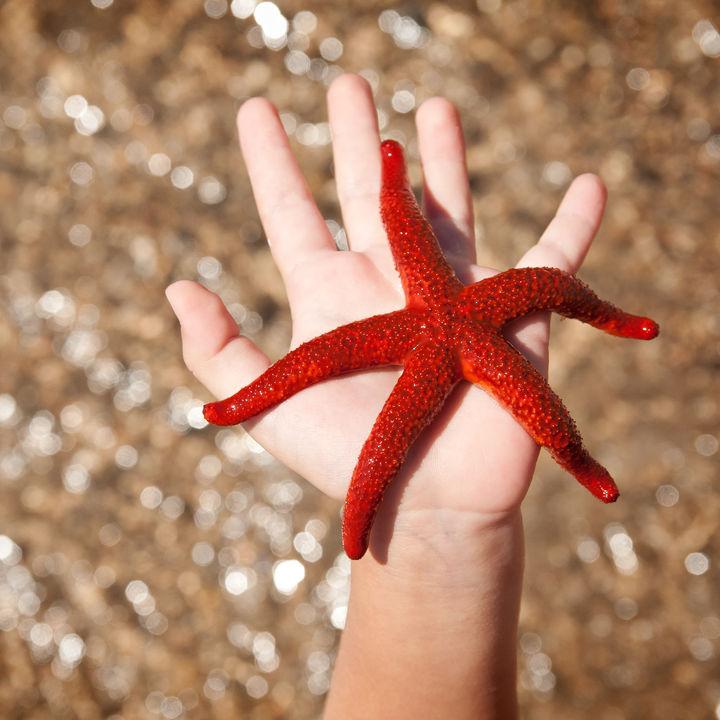 広島近郊のふれあい体験ができる水族館。海の生き物を実際に触れて楽しもう