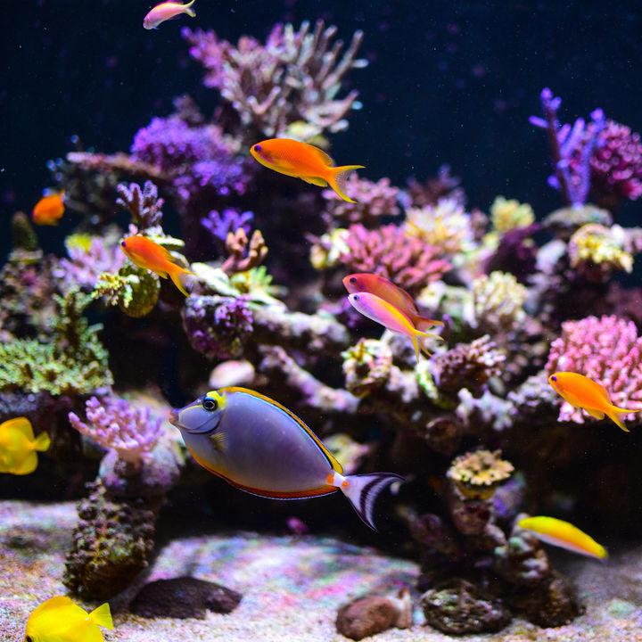 都内周辺の水族館でクーポンを利用してお得に楽しく遊ぼう