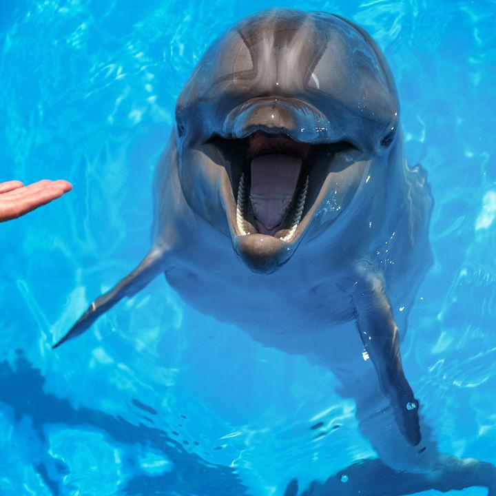 元旦も営業している静岡県の水族館で年明けの家族のお出かけに