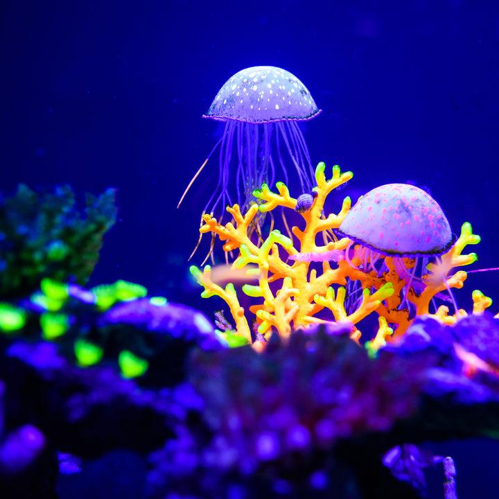 静岡県で展示が魅力の水族館。子連れにおすすめのスポット