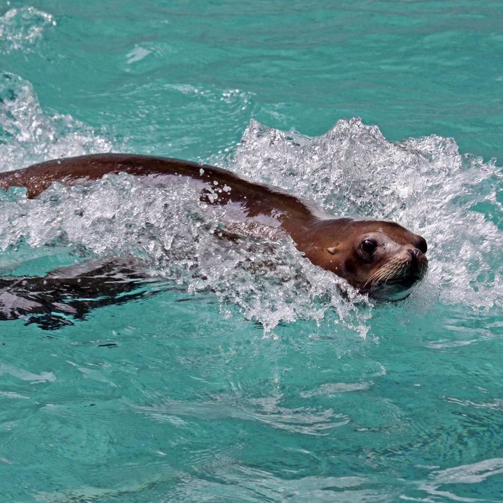 静岡県周辺に水族館のイベント情報。ふれあいタイムなど、家族で楽しめるイベントを調査