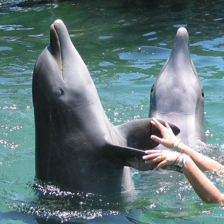 静岡県周辺の水族館。餌やりやふれあい体験など家族で楽しもう