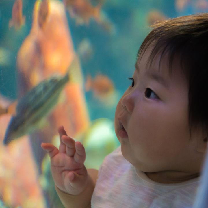 静岡県周辺の水族館。赤ちゃん連れでも楽しめる設備や展示を調査