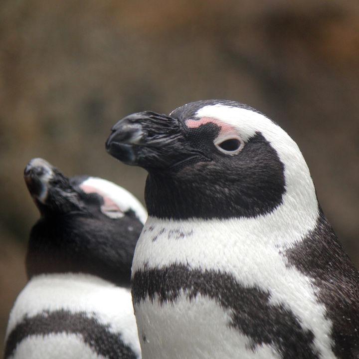 北陸の水族館。えさやりプログラムで海の生き物を体感しよう