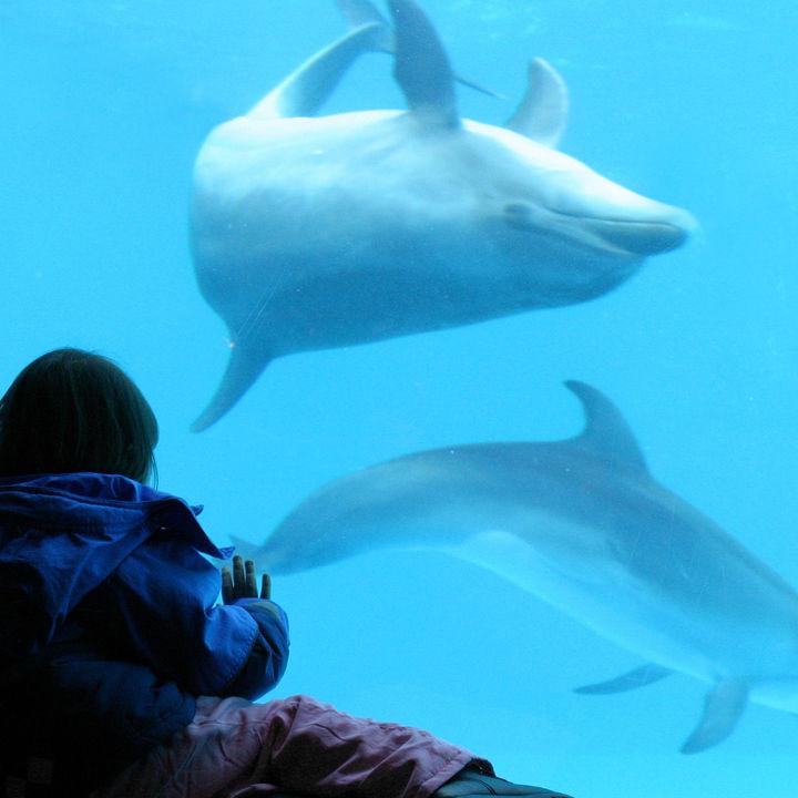 兵庫周辺の水族館で観光スポットが近くにある楽しめるスポットを紹介