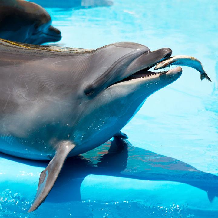 北陸の水族館で餌やりプログラムを楽しもう。子連れにおすすめのスポットを調査