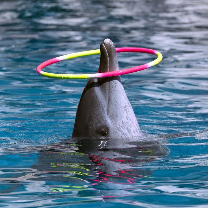 北陸のお正月に営業している水族館で子どもが楽しめる時間をつくろう