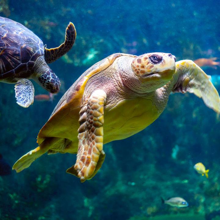 東京にある水族館の料金やクーポン、割引情報などを調査
