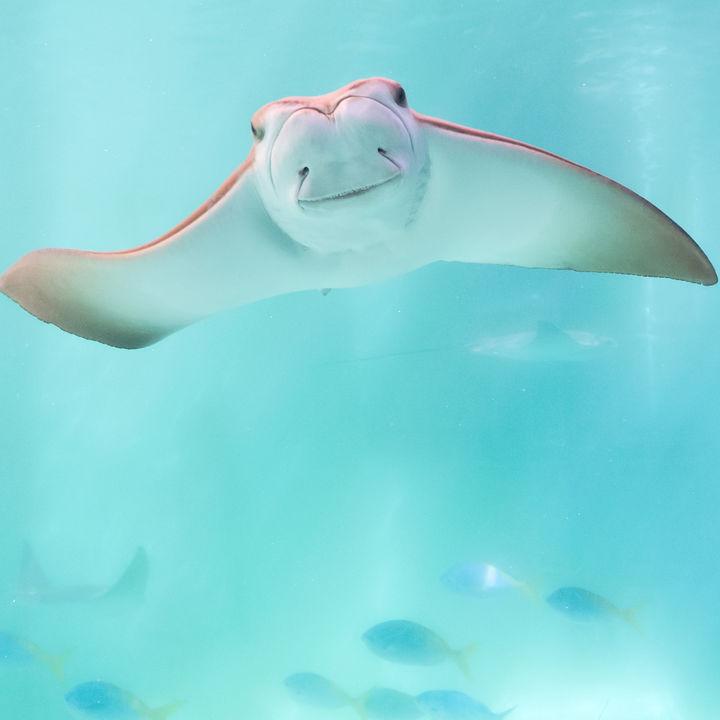 神奈川県の水族館。元旦から営業している子連れにおすすめのスポット