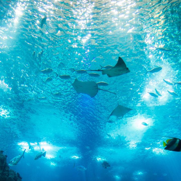 横浜周辺でお正月に営業している水族館。新年から水族館で遊ぼう