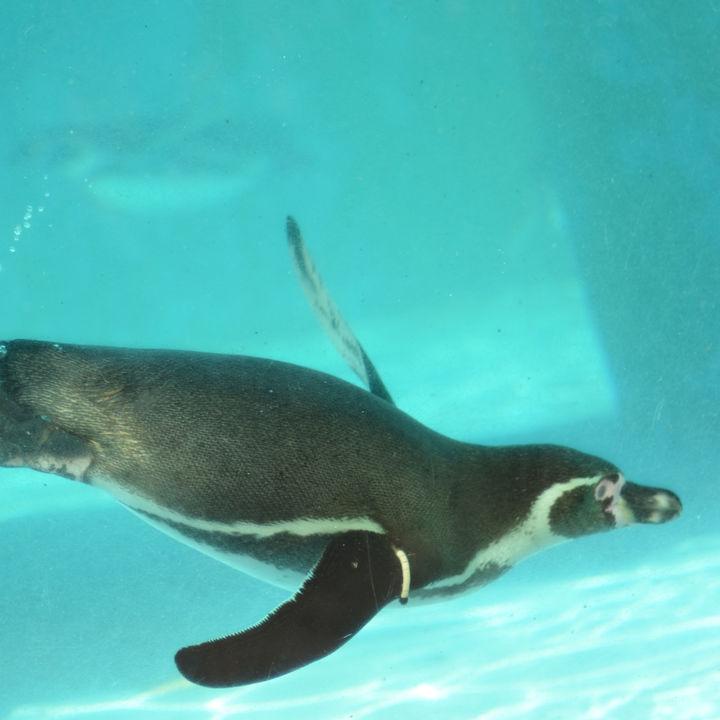 横浜周辺の水族館で、元旦も家族のお出かけを楽しもう