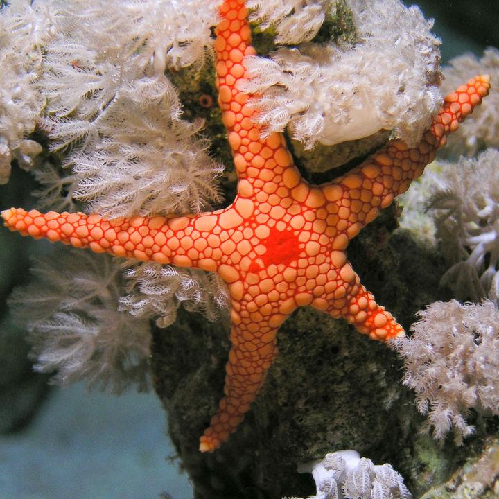 四国にある海の生き物に触れる体験ができる水族館。子どもと生き物をたくさん観察しよう