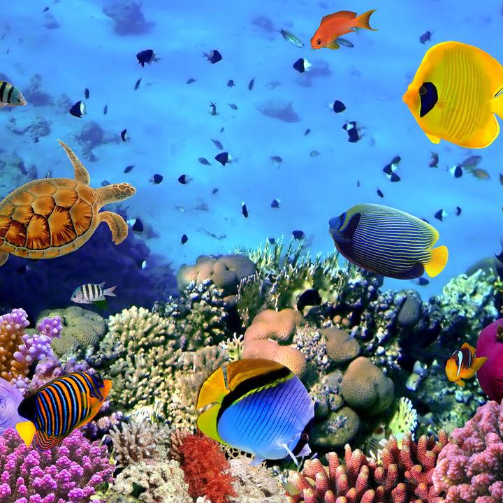 神奈川県の水族館。さまざまな種類に出会える子連れにおすすめのスポット