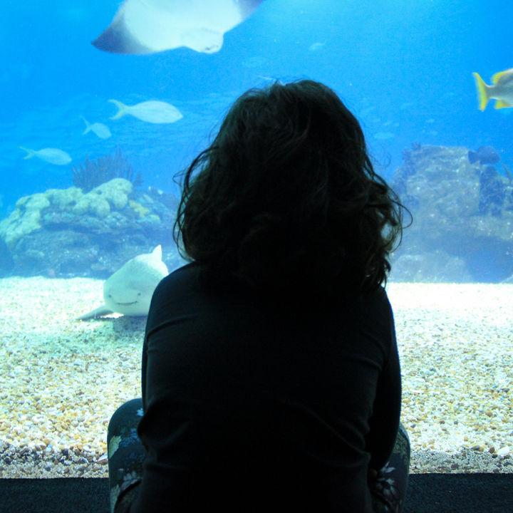 東京の楽しいイベントがある水族館について。ショーや体験型など子どもといっしょに楽しもう