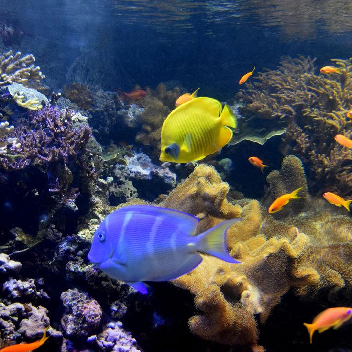 東京の水族館で冬限定のイベントや展示を家族で楽しもう