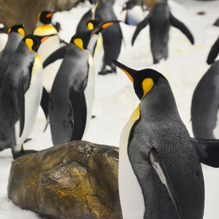 北陸のショーが見れる水族館で海の生き物を間近で感じよう。