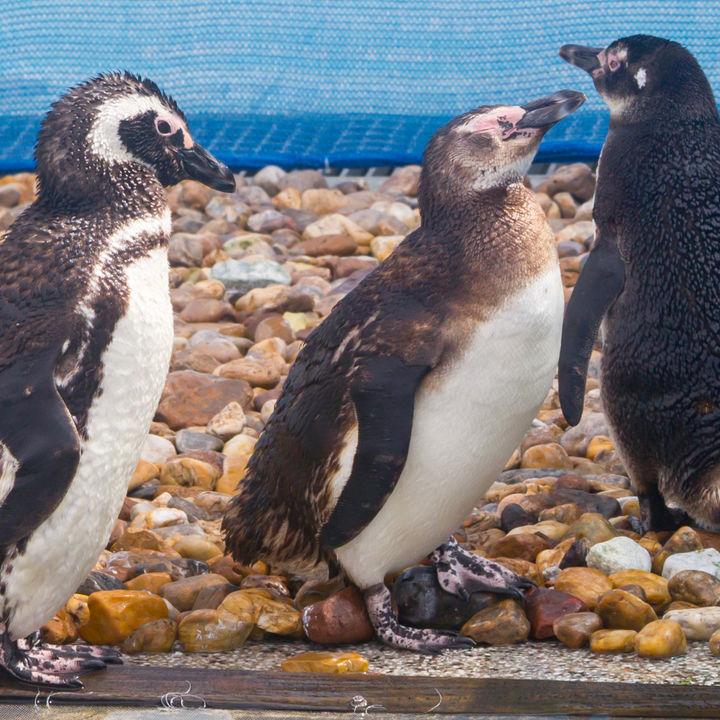 横浜周辺の餌やりプログラムがある水族館で海の生き物とのふれ合いを体験しよう