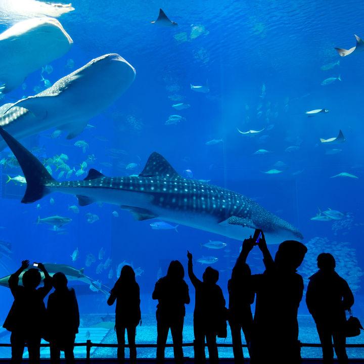 神奈川県周辺の水族館。クーポンを利用してお得に遊ぼう