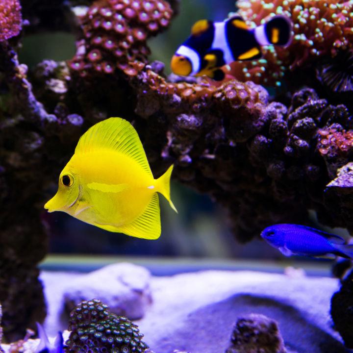 横浜周辺の水族館。工夫のある展示が人気のスポット
