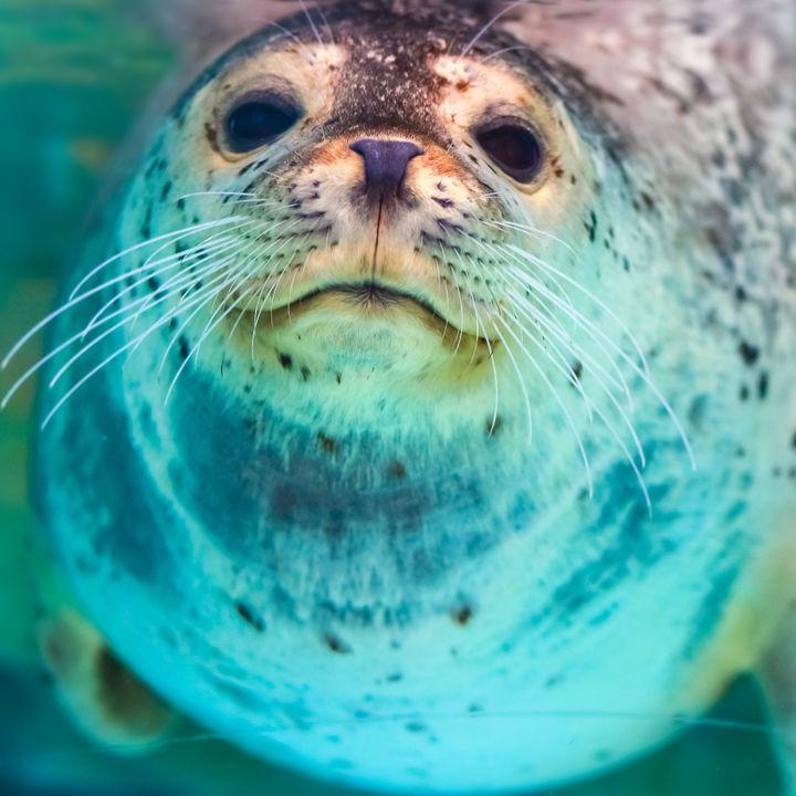 北海道のえさやりプログラムがある水族館で海の生き物を体感しよう