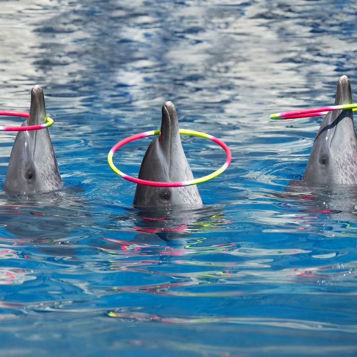 神奈川県で海の生き物のショーにこだわっている水族館のおすすめを調査