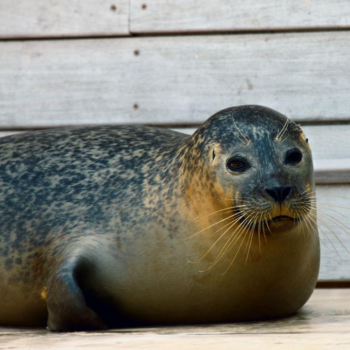 北海道でエサやりやふれあい体験ができる水族館で子どもといっしょに楽しもう