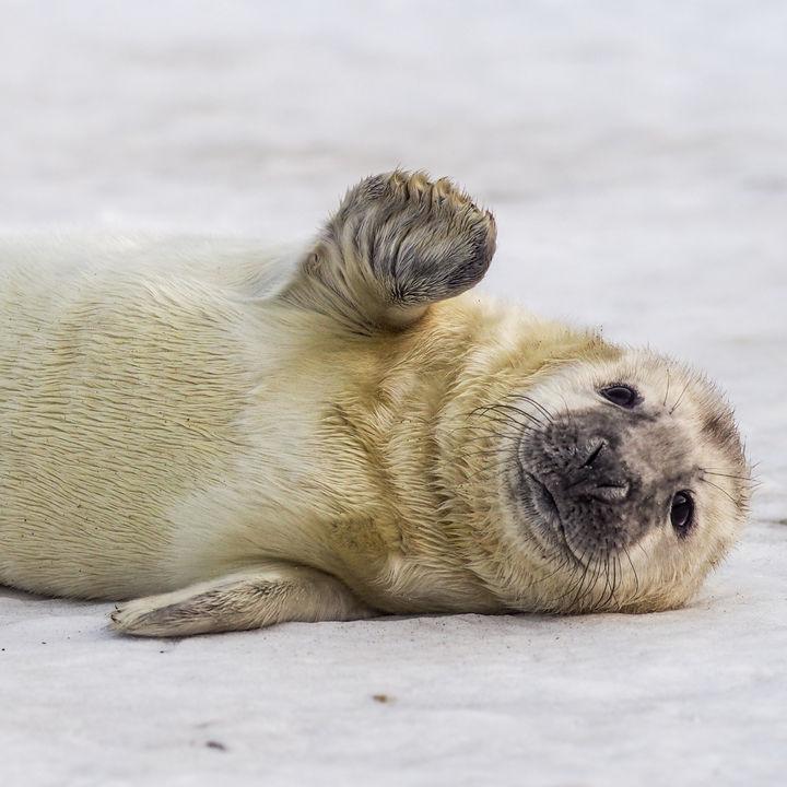 北海道の水族館。餌やりプログラムで海の生き物を体感しよう