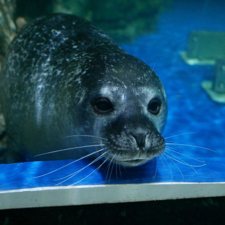 北海道の水族館でふれあい体験をしよう。子連れにおすすめのスポットを紹介