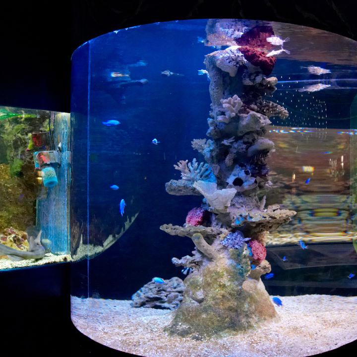北海道で展示方法が魅力的な水族館。子連れにおすすめのスポット