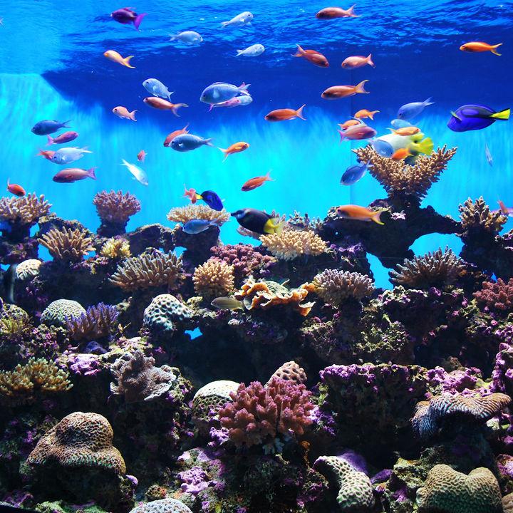 都内の水族館。子連れ観光におすすすめのスポット