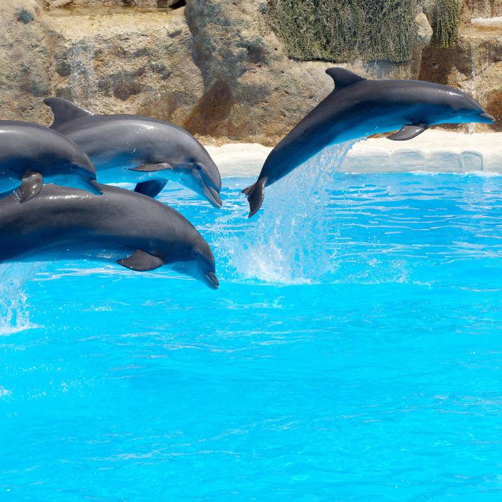 東京でショーが楽しめる水族館はここ。子どもとショーを楽しもう。