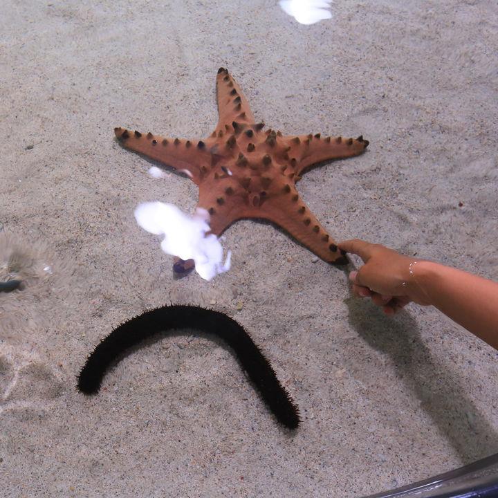 都内の水族館で生き物に触れる体験ができる施設を紹介