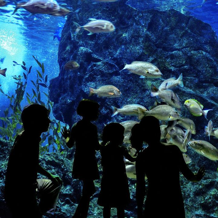 東京の水族館で生き物と触れる体験。親子で海の生き物を体感しよう