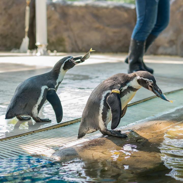 東京の水族館で餌やりプログラムを体験。親子で海の生き物を体感しよう
