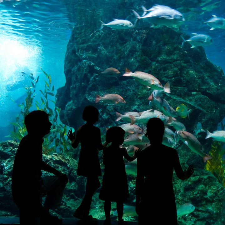 横浜周辺の水族館。冬に家族でお出かけを楽しめる場所をご紹介