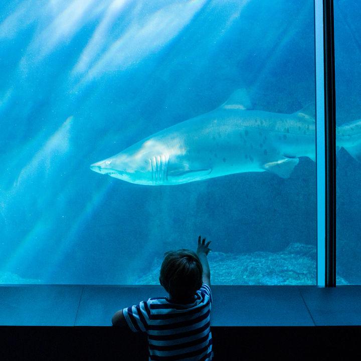 東京近郊の水族館は年始いつから営業している?お正月も楽しめるところをご紹介