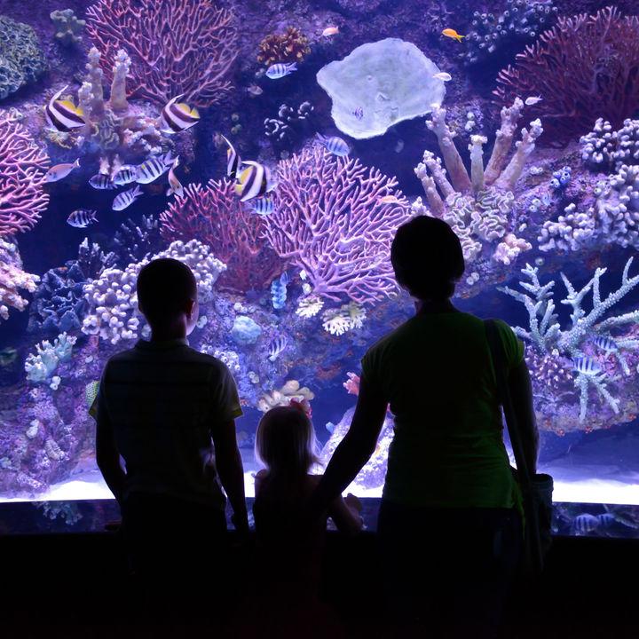 都内の水族館。冬でも出かけたくなる子連れにおすすめのスポット