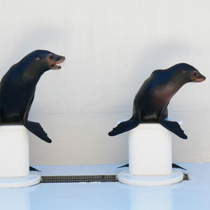 横浜周辺にある水族館の料金について。クーポンやお得に行ける情報など