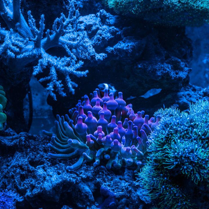 横浜周辺の水族館でナイトアクアリウムが楽しめるスポット。ひと味ちがう水族館へ遊びに行こう