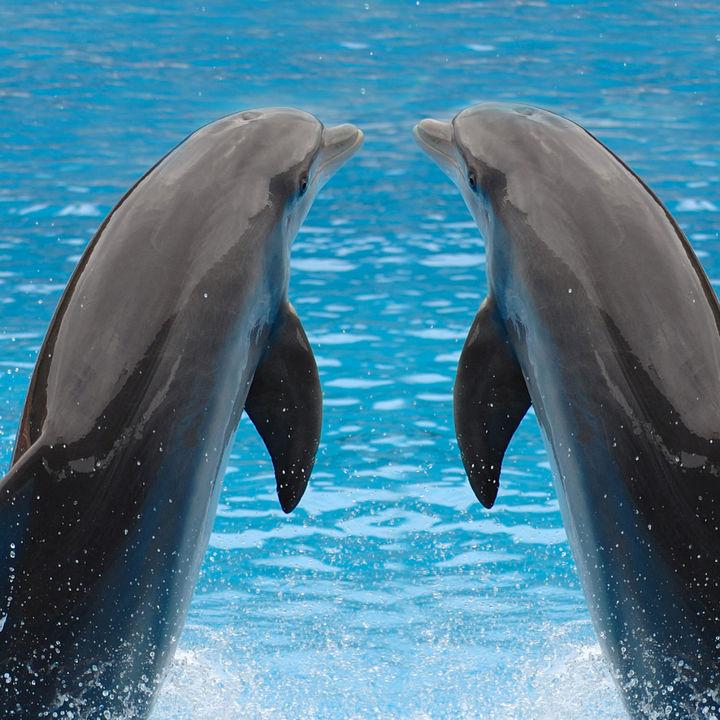 東京都内のさまざまな種類の生き物に出会える水族館