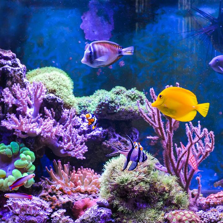 横浜周辺の水族館で夜ならではのショーやイベントを楽しもう
