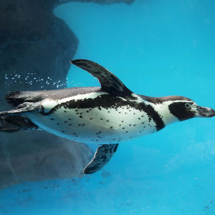 大阪周辺の水族館へ、お正月も家族で出かけよう