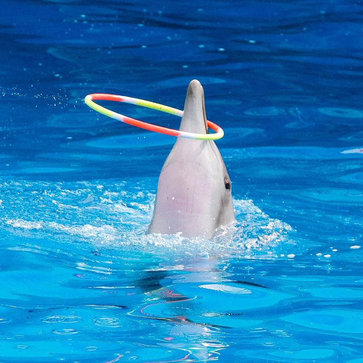 大阪周辺のショーが行われている水族館。子どもも大人も楽しめる場所を紹介