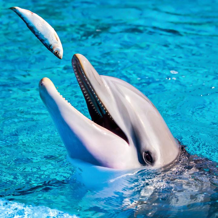 都内の水族館でえさやりプログラムを楽しもう。子連れにおすすめのスポットをご紹介