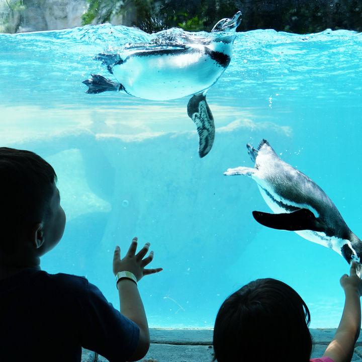 兵庫周辺でお正月に営業している水族館。家族みんなで楽しめるところをご紹介